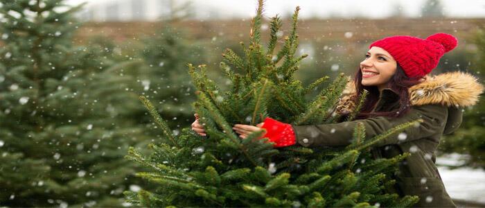donna che sceglie un albero di Natale