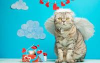 gatto cupido della San Valentino