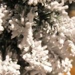 images/product/150/019/2/019281/mini-sapin-enneige-h-45-cm_19281_1